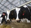 Video: Munters Natural Ventilation Solutions for Dairy