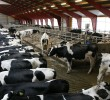 Dairy ventilation solutions for high scale milk production