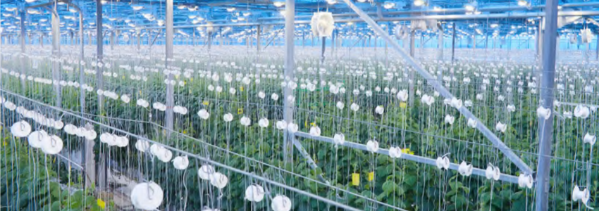 LED-lights-in-greenhouse.png