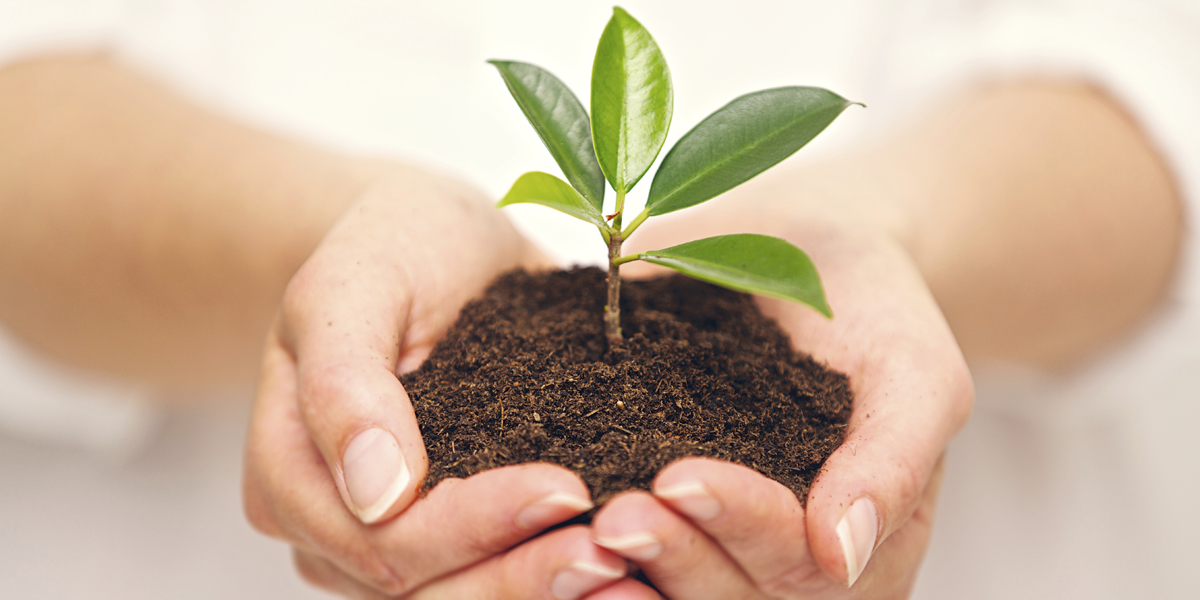 Handful of soil with young plant growing_Thinkstock_465667055_1200x600.jpg