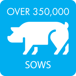 Over-350000-Sows-1.png
