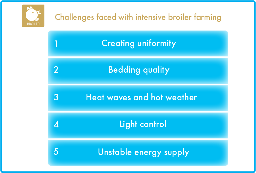 Broiler climate challenges
