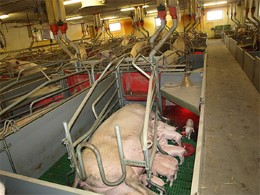 Farrowing unit in Denmark