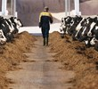 Ten ways to increase profitability for dairy farmers