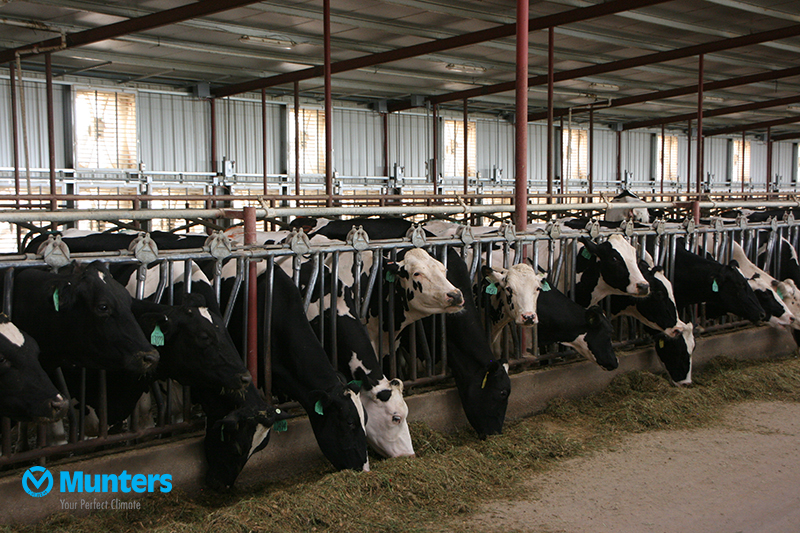 Ventilation in dairy stable