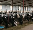 A Partnership in U.S. Dairy