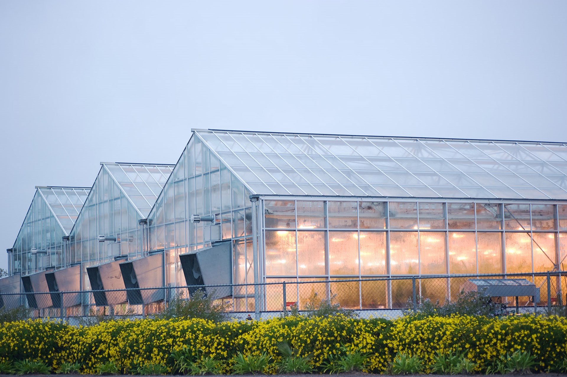 Greenhouses_AdobeStock_25668621.jpg
