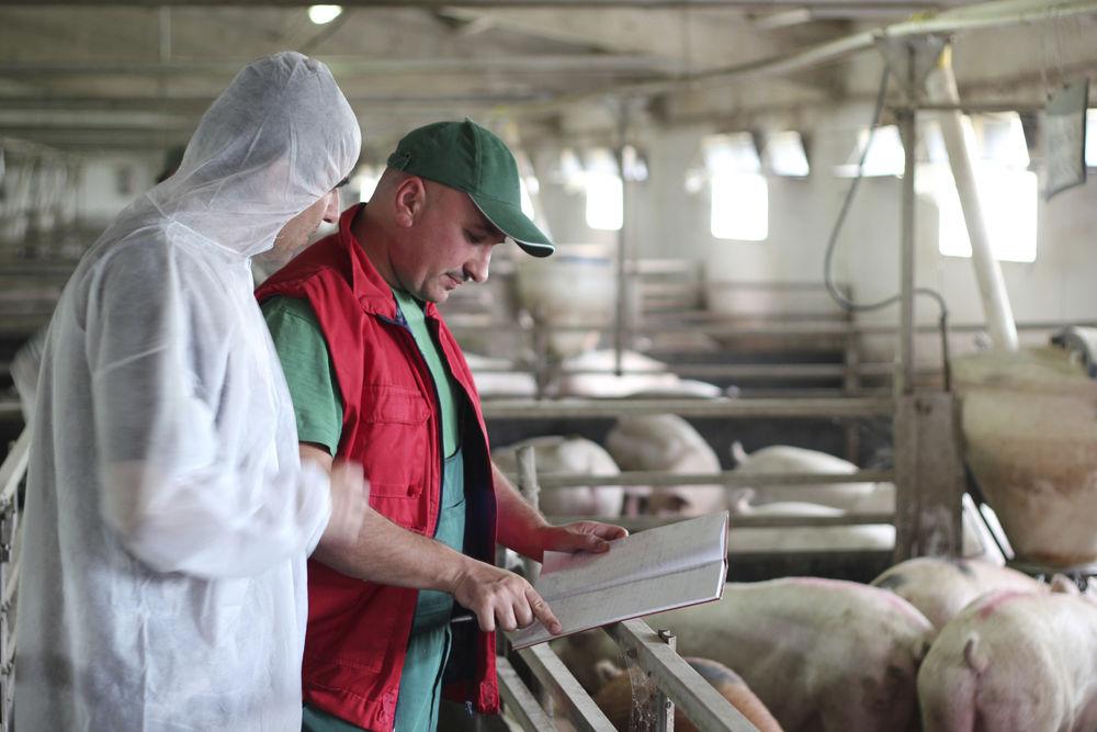В Бразилии снова выросли производственные затраты в птицеводстве и свиноводстве